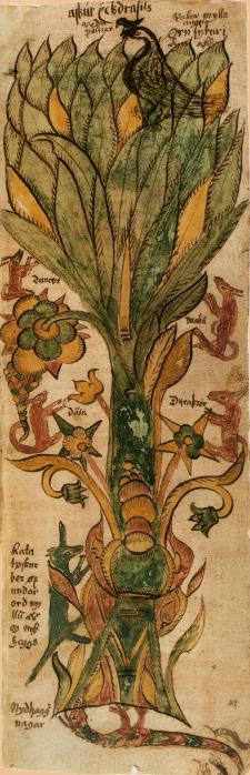 Yggdrasil, fra et gammelt islandsk dokument. Kilde: Wikimedia Commons